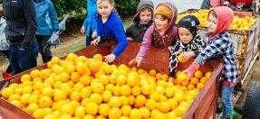 Kids Harvest Festival
