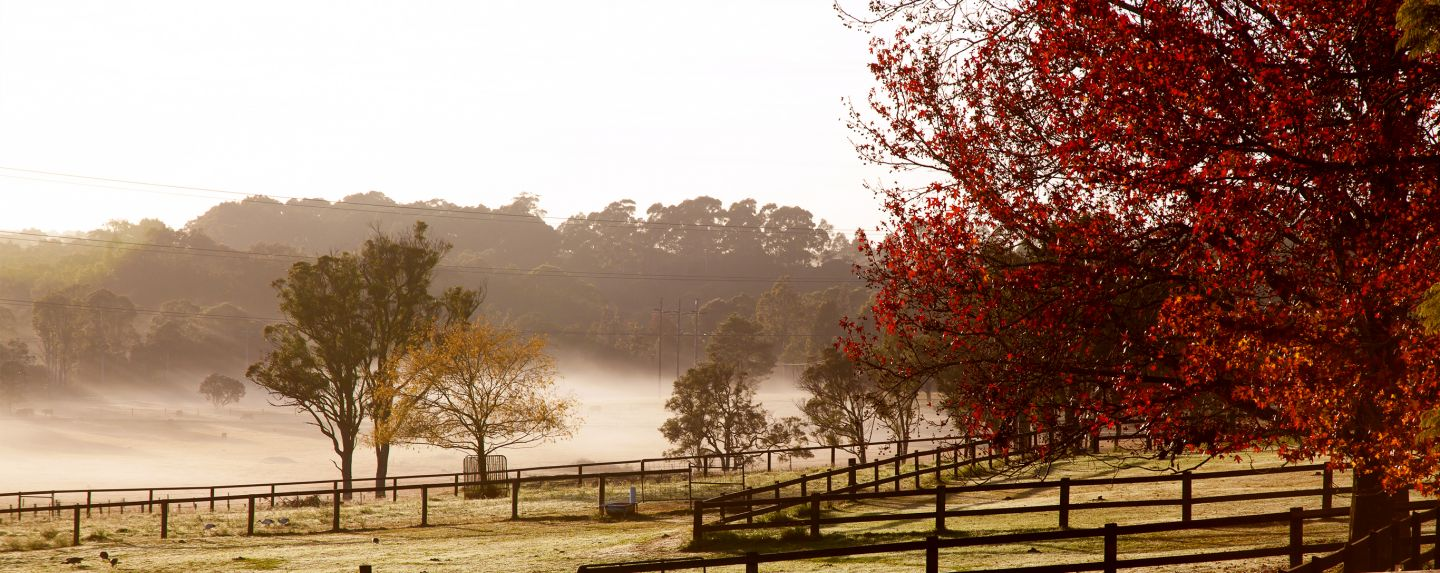 autumn image of red and yellow trees in farm paddock